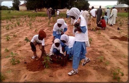 de jeunes filles de Ngaoundéré qui plantent des arbres